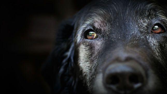good-old-dog.jpg.653x0_q80_crop-smart