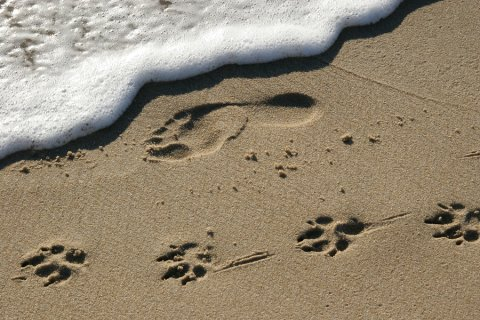resized_480x320_bigstock_Footprints_865429